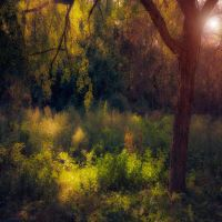 unanswerable questions by ildiko-neer