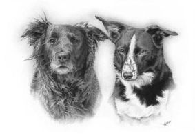 Indie and Saffy by arhicks