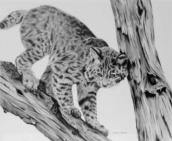 Bobcat by graphiteartistaz