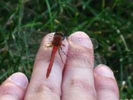 Dragonfly on My Hand by Birchflame23
