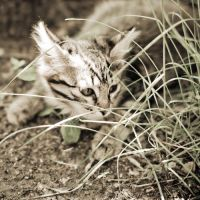 Little tiger in hide by Wineberry