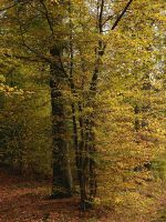 Arbres d'automne - vertical by yuushi01