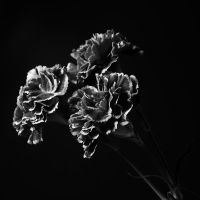 Flowers - Black and White by Arcius-Azrael