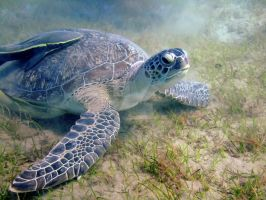 Turtle IV by MotHaiBaPhoto