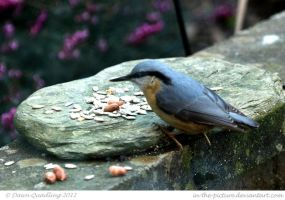 Nuthatch by In-the-picture