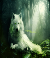 THE FORESTS WOLF by Unbot