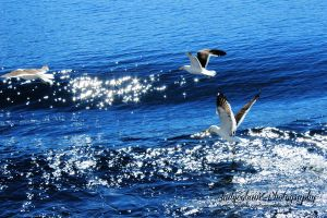 Lake filled with gulls by andycobain
