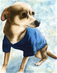 Warm in my Sweater - Pet Portrait Commission by HMS-ArtHound