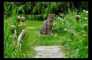 The Cat and the Bridge by Forestina-Fotos