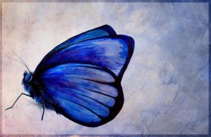 But no Butterfly is born into this beautiful form. by Lyswen