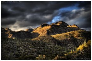 Sabino Canyon by yungstar