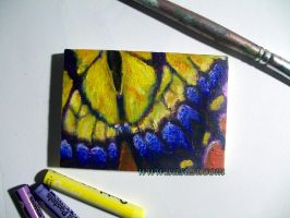 Tiger Swallowtail Butterfly ACEO by selkie-gal