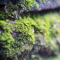 Mossy by vibrant-colors