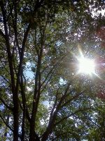Sunshine Through the Trees by Fobok