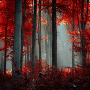 Flames by ildiko-neer