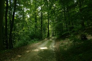 Preautumnal forest path by sahk99