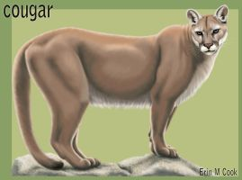 Cougar Final by COOKEcakes