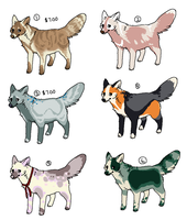 $5 Foxes by cheepers