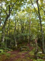 Another forest in Franconia by arkytaka