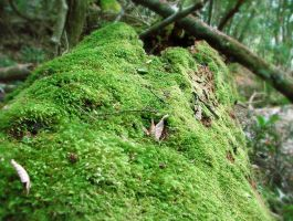 Moss on the forest floor by GoblinStock