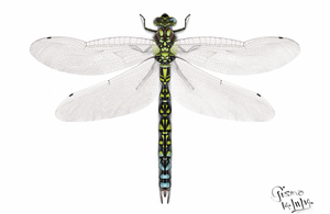 dragonfly by gismo84