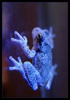 frog fluorescence by littleredelf