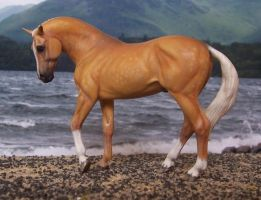 Palomino Warmblood Stallion by ymagier