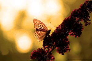 Butterfly by CanonUserPhil