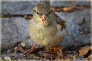 angry bird by brijome