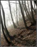 Trees in fog by Shira9