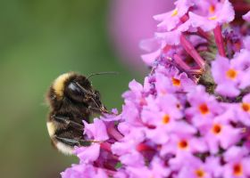 busy bumble... by clochartist-photo