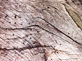 Wood Texture 06 by Siobhan68
