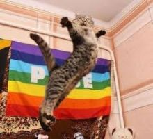 Gay Pride Cat by MsDeathTheKid