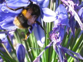 Busy Bumble Bee by Tainted-Fire