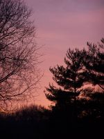 pink sky and trees 2 by brokenphoto