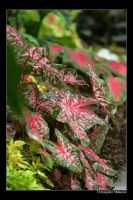 Red Veins by Calzinger
