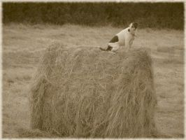 Megan On A Haybale2 by bagnaj97