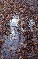 Forest Puddle by Cruzio