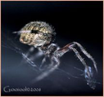 Spider in the dark 2 by Gooiool