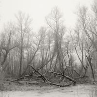 Fallen trees by giedriusvarnas