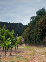 Vineyard road by iisjahstock