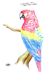 Rainbow Macaw by IL-JA