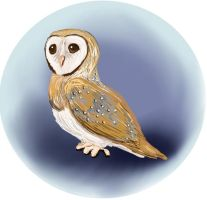 Owl by Caium