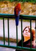 Mrs. Doolittle outstares a Rosella. by Geoperno