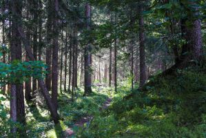 Forest Path 10 by Pagan-Stock