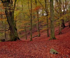 Grizedale forest by Batbreath