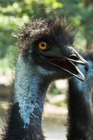 Emu See You by Sunnidaez
