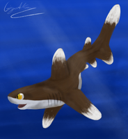 Oceanic WhiteTip Shark is happy by GingaAkam