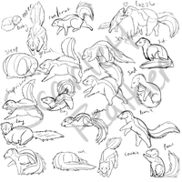 Sketching: Skunk Poseset by ScarlettFeather