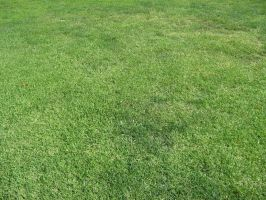 Green Grass - Perspective by thepantry